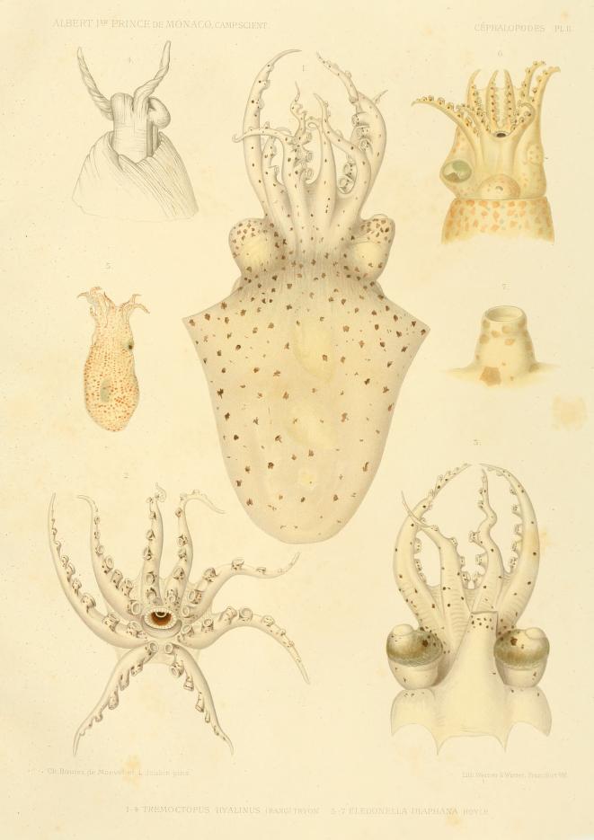 """Lámina de la obra """"Résultats des campagnes scientifiques accomplies sur son yacht par Albert Ier, prince souverain de Monaco"""", fascículo 17 (1900)."""